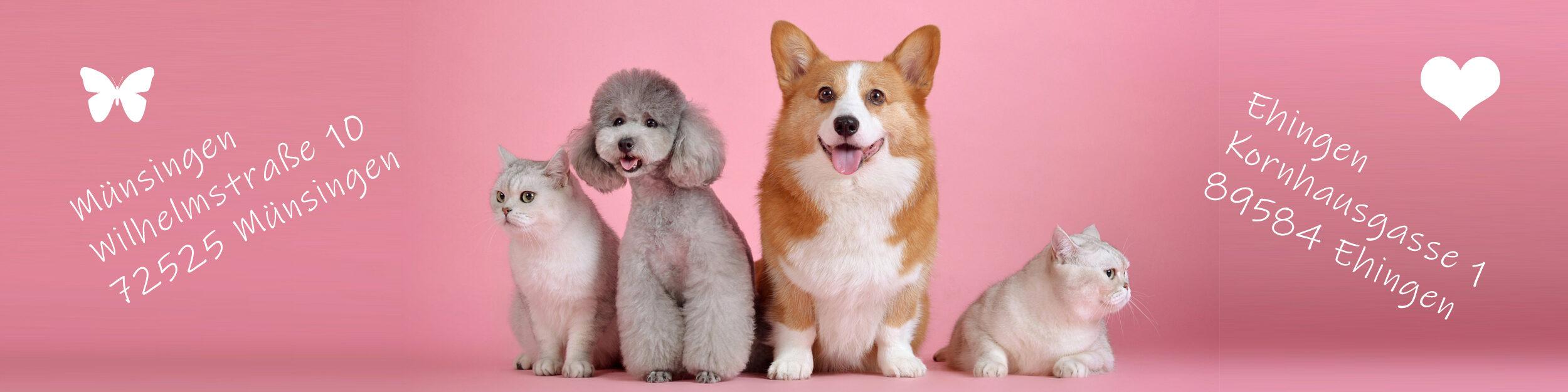 Hundesalon Tierisch schön